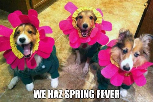 spring fever dogs